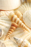 Sea shells. Collection of pastel sea shells royalty free stock photos