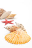 Sea shells. A group of sea shells on white background, narrow depth of focus Stock Images