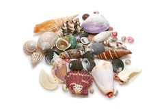 Sea shells. Bunch of sea shells isolated over white Stock Photos