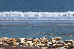 Sea shells. With the sea at background stock photography