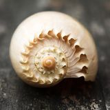 Sea shells... Royalty Free Stock Photo