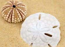 Sea shells stock images