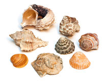 Sea shells. Royalty Free Stock Photos