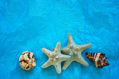 Sea Shells. On a teal background Royalty Free Stock Photos