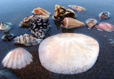 Sea-shells 2. A group of sea-shells on a sandy beach royalty free stock image