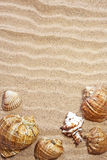 Sea shells. With sand as background Royalty Free Stock Photo
