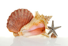 Sea shells Royalty Free Stock Photo