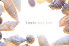 Sea shells. With white background text free Royalty Free Stock Photography