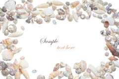Sea shells. Different color shells with white background Royalty Free Stock Photo