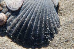 Sea Shells (23) Stock Photography