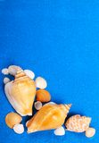 Sea shells. Some conch sea shells on blue sand background Stock Photos