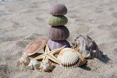Sea Shells Stock Image