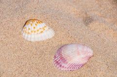 Sea shells. Two gorgeous sea shells on the beach in dubai Stock Photography