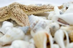 Sea shells. Collection of sea shells and a starfish Stock Image