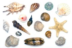 Free Sea Shells Royalty Free Stock Image - 3305206