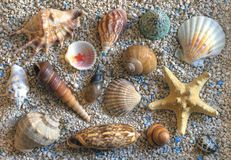 Free Sea Shells Royalty Free Stock Images - 3305219