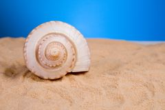 Sea shells. Sea shell in the sand stock image