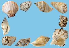 Sea shells. Background from beautiful sea shells Stock Images