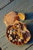 SEA-SHELLS Imagen de archivo libre de regalías