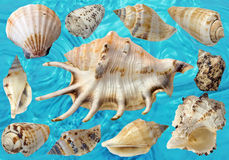 Sea shells. Background from beautiful sea shells Royalty Free Stock Photos