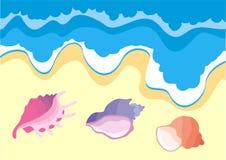 Sea shells. Illustration with sea shells ashore Stock Images