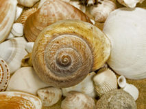 Sea shells Stock Photo