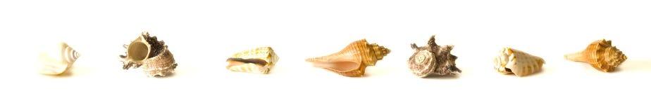 Sea shells. Isolated on white background Stock Photo