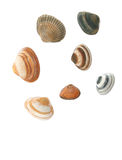 Sea shells. Isolated on white background Royalty Free Stock Photo
