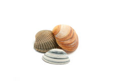 Sea shells. Isolated on white background Royalty Free Stock Photos