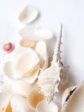 Sea Shells. A beautiful high key still life image of an assortment of seashells, of varying shapes and sizes, in high key on clean white background.  Sprinkle of Royalty Free Stock Photography