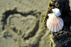 Sea-Shells. On an old wooden post over a sandy beach with a heart symbol out of focus Royalty Free Stock Photo
