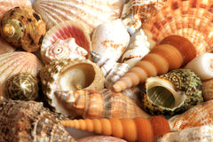 Sea Shells. Assortment of Sea Shells on a sunny day Stock Photo