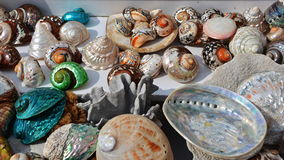 Free Sea Shells Royalty Free Stock Images - 58523729