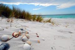 Sea shells. Taken on a pristine white beach in Tasmania, Australia Stock Photo