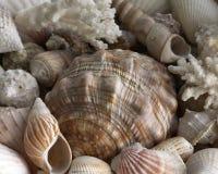 Sea shells. Mixed stock photography