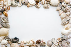 Sea shells. Different shells lying chaotically as a frame Royalty Free Stock Photography