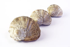 Sea shells. Macro image of a sea shells royalty free stock image