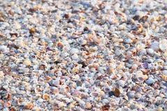 Sea Shells - Abstract Marine Background stock photography