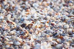 Sea Shells - Abstract Marine Background stock images
