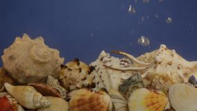Sea shells and air bubbles in blue water. Beauty in nature stock footage