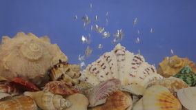 Sea shells and air bubbles in blue water. stock footage