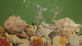 Sea shells and air bubbles in green water. The concept of underwater life stock video footage
