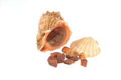 Sea shells and amber Royalty Free Stock Images