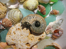 Sea shells and ammonite Stock Photography