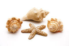 Sea Shells And Sea Star Stock Images