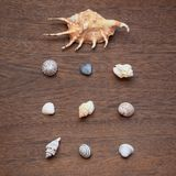 Sea shells arranged on brown wooden background. Travel memories concept. Top view, square image stock image