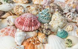 Sea shells arranged on isolating background Stock Photo