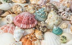 Sea shells arranged on isolating background. Sea shells arranged on isolating white background stock photo