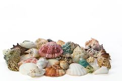 Sea shells arranged on isolating background Royalty Free Stock Images