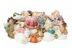 Sea shells arranged on isolating background Stock Images